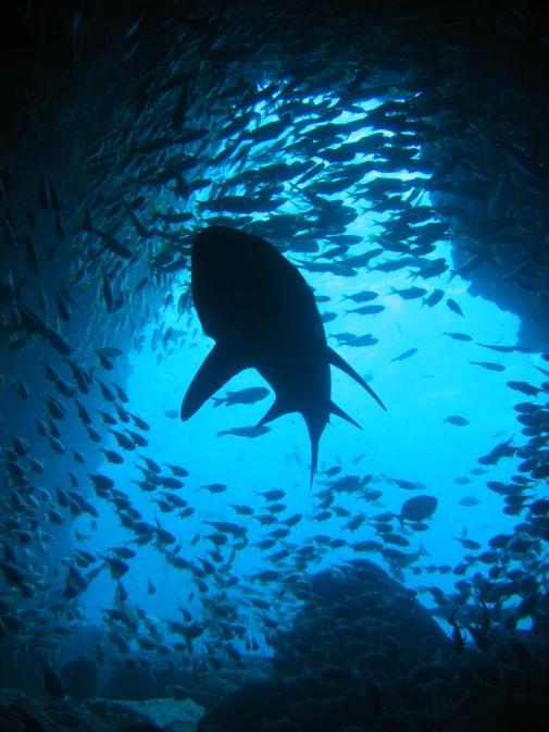 Shark_and_Fish